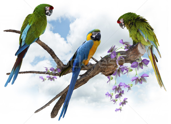 Macaw Parrots Perching Stock photo © saddako2