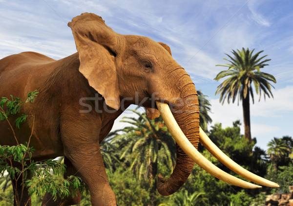 Elefante africano natureza plantas africano forte animais selvagens Foto stock © saddako2