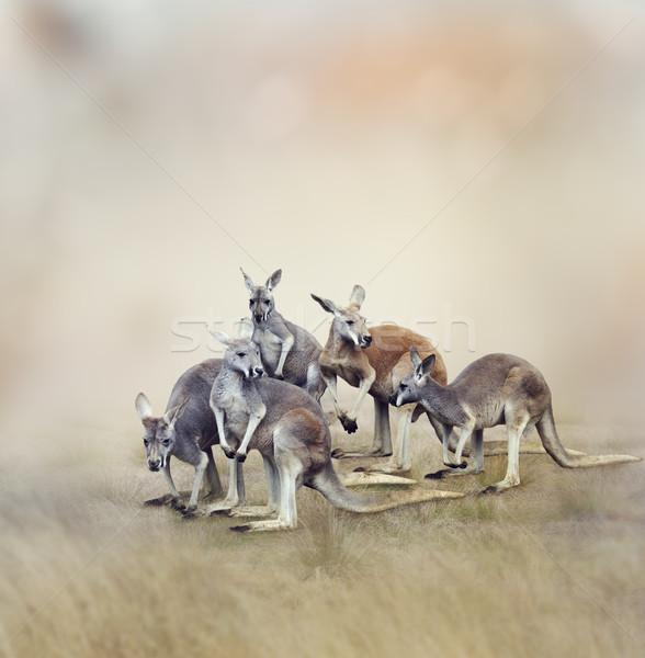 Nyáj természet mező tapéta barna vadvilág Stock fotó © saddako2