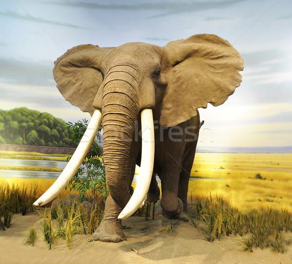Afrikai elefánt töltött elefánt férfi trófea múzeum Stock fotó © saddako2