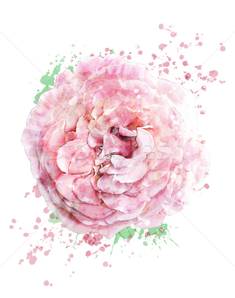 Stock photo: Watercolor Image Of Rose