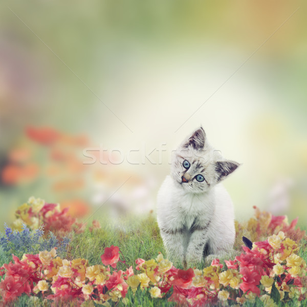 Blanche chaton fleurs cute chat jardin Photo stock © saddako2