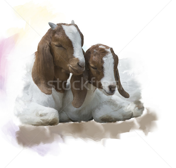 Young Boer goats watercolor Stock photo © saddako2