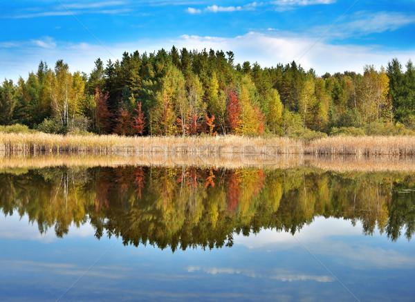 ősz tájkép színes erdő kicsi tó Stock fotó © saddako2