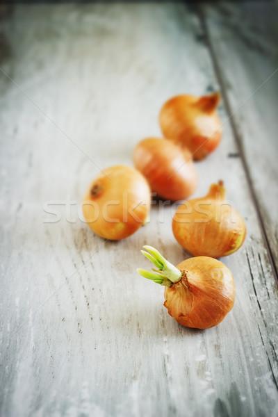 Cebolla edad vintage estilo hortalizas Foto stock © saharosa