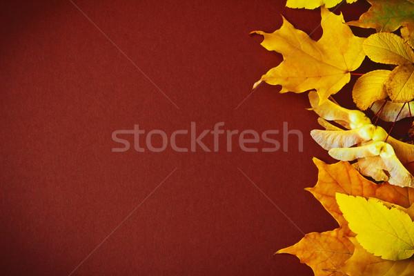 Különböző őszi levelek barna ősz természet háttér Stock fotó © saharosa
