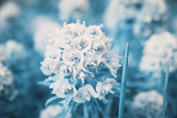 Сток-фото: цветочный · саду · цветы · избирательный · подход · изображение · текстуры