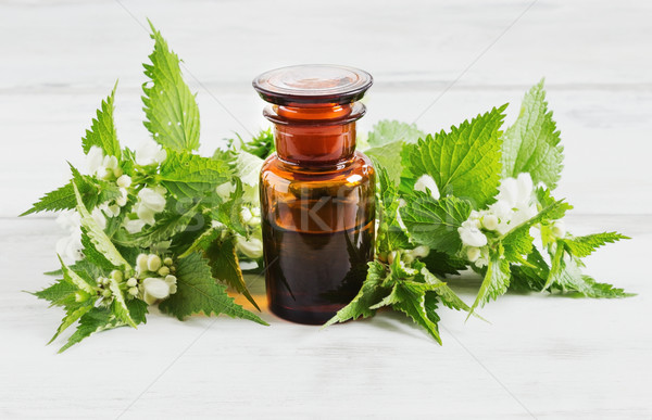 nettle essence oil  Stock photo © saharosa