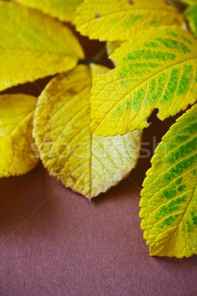 Najaar Geel bladeren bruin achtergronden Stockfoto © saharosa