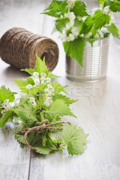 branches of nettle Stock photo © saharosa