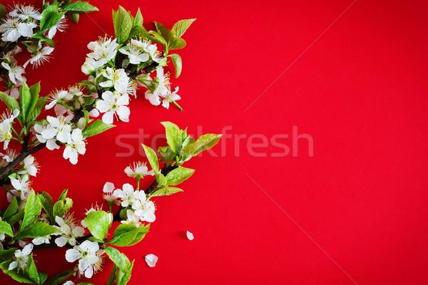 Bloei kers tak mooie Rood Stockfoto © saharosa