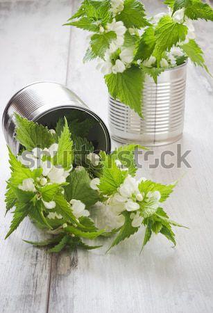 blooming nettle Stock photo © saharosa
