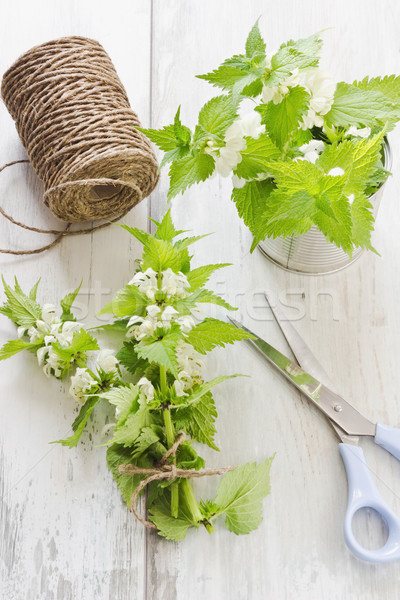 branch of nettle Stock photo © saharosa