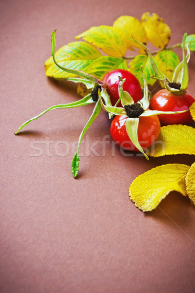 rosehip fruit  Stock photo © saharosa