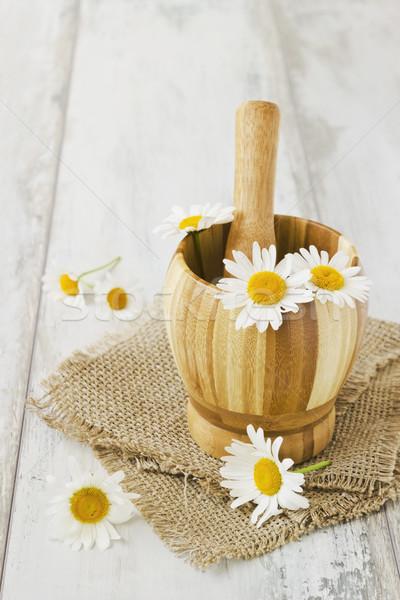 Foto stock: Margaridas · velho · seletivo · flores · espaço