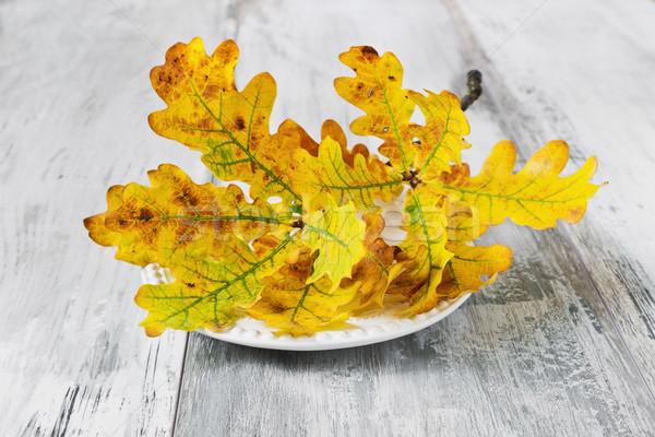ág citromsárga tölgy levelek tányér öreg Stock fotó © saharosa