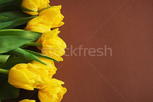 Amarillo tulipanes marrón vacaciones fondos espacio de la copia Foto stock © saharosa