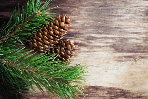 pine cones Stock photo © saharosa