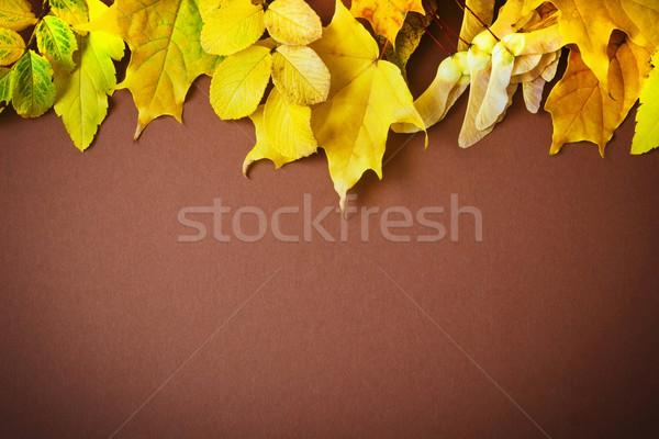 Hojas de otoño diferente marrón otono naturaleza fondo Foto stock © saharosa