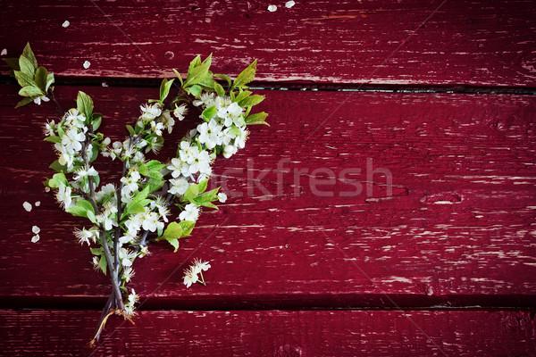 цветения Вишневое филиала букет дерево Сток-фото © saharosa