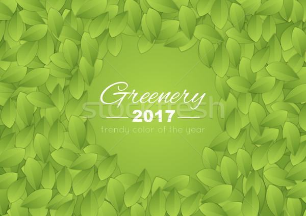 Kolor rok zieleń streszczenie lata pozostawia Zdjęcia stock © saicle
