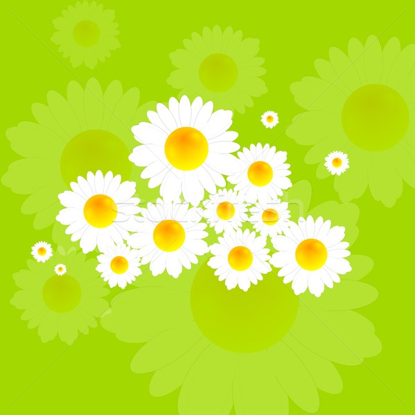 Bright summer background with camomile flowers Stock photo © saicle