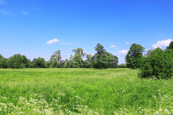 Beautiful field landscape Stock photo © saicle