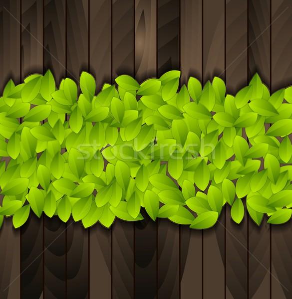 Zielone lata pozostawia wektora eco Zdjęcia stock © saicle