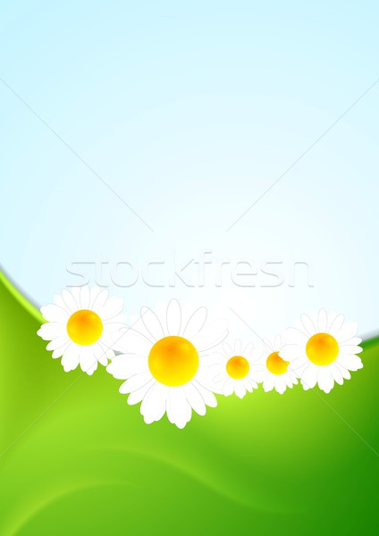 Summer background with green waves and camomiles Stock photo © saicle