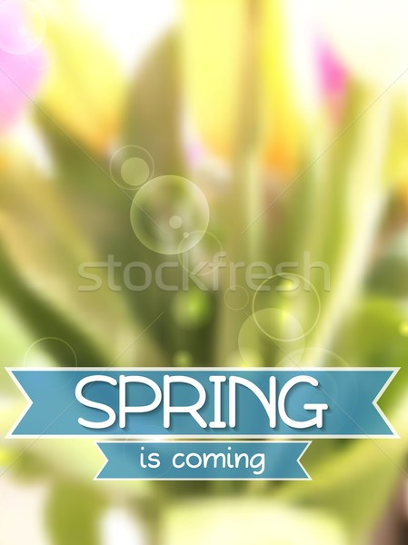 Spring background. Blurred tulips bouquet Stock photo © saicle