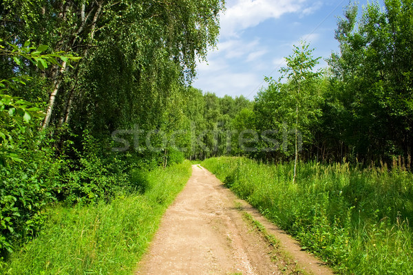 Stock photo: The road in the forest