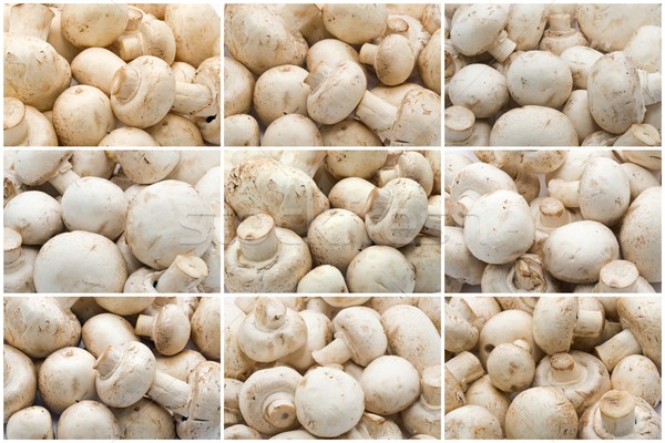 Champignon mushrooms Stock photo © sailorr