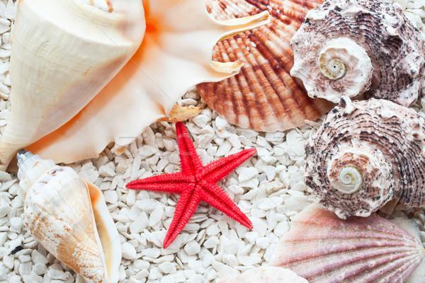 Foto stock: Conchas · tropical · praia · mar · fundo · oceano