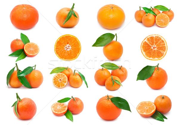 Coleção suculento isolado branco comida laranja Foto stock © sailorr