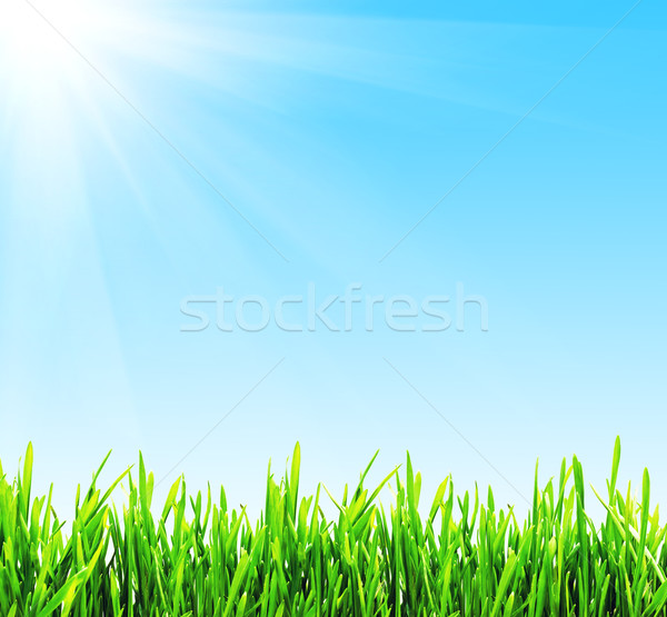 Spring background Stock photo © sailorr