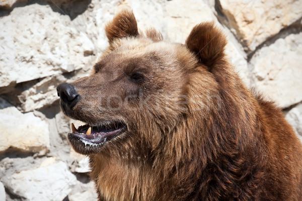 Bear Stock photo © sailorr