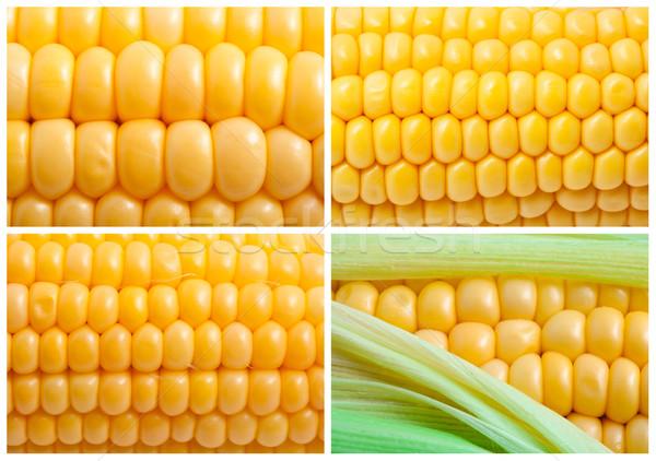 Corn Stock photo © sailorr