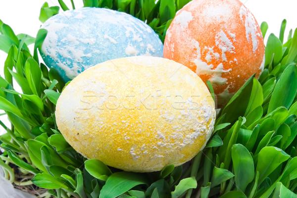 Easter eggs colorato erba Pasqua primavera verde Foto d'archivio © sailorr