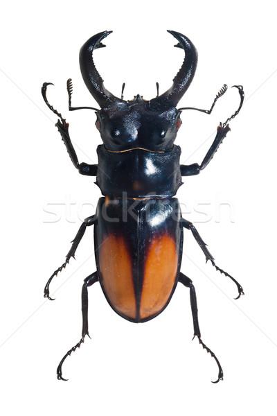 Bug énorme isolé blanche nature Photo stock © sailorr