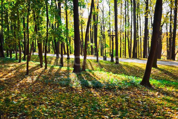 Stock photo: Sunny park