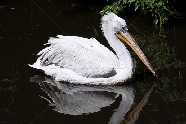 Primo piano foto cute bianco acqua uccello Foto d'archivio © sailorr