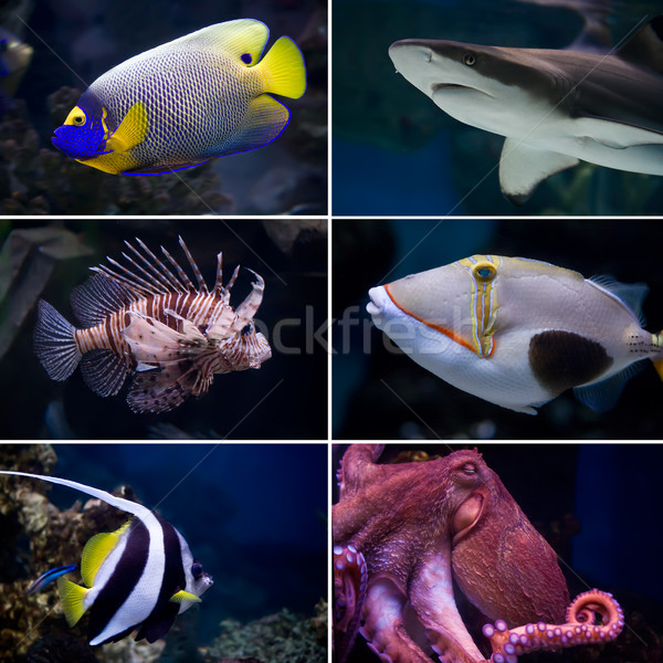 Exotic fishes Stock photo © sailorr