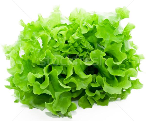 салата свежие зеленый Салат белый изолированный Сток-фото © sailorr