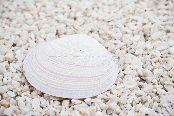 Seashells Stock photo © sailorr