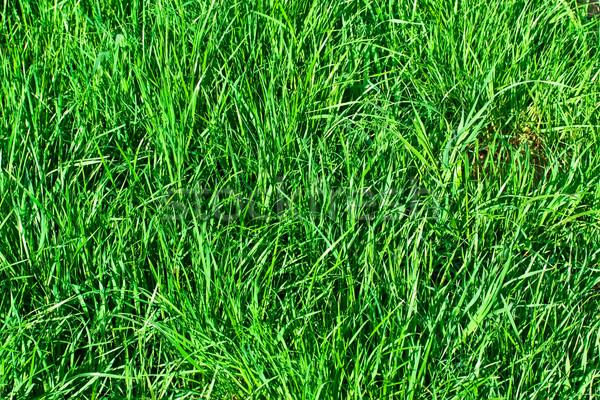 ストックフォト: 緑の草 · 緑 · 芝生 · することができます · 中古 · 夏