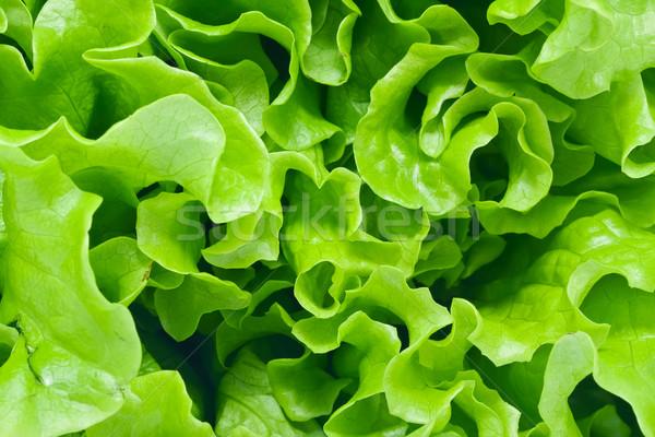 レタス 新鮮な 緑 サラダ 葉 庭園 ストックフォト © sailorr