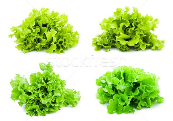 салата коллекция свежие зеленый Салат изолированный Сток-фото © sailorr
