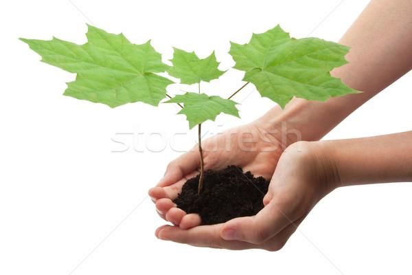 Stock photo: Tree in hands