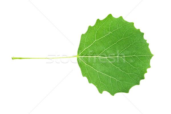 Green leaf Stock photo © sailorr