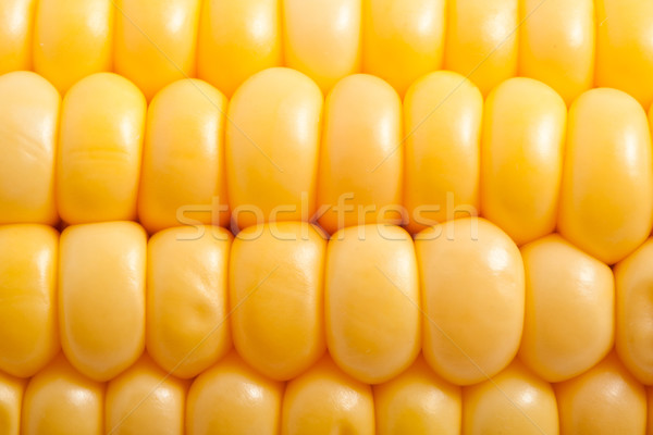 Corn Stock photo © sailorr
